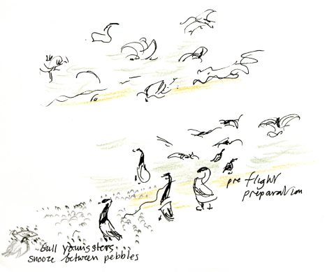 Birds001